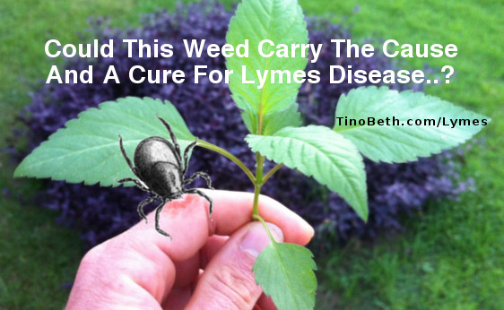 cure and cause lymes disease